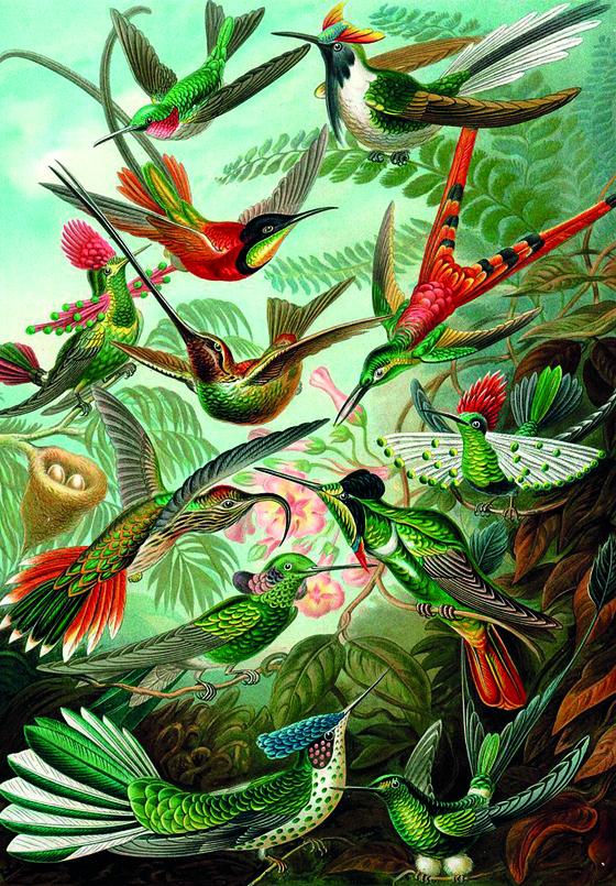 Kunstformen der Natur – Clase bcn