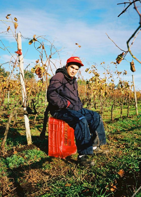Vinyes de Barcelona – Clase bcn