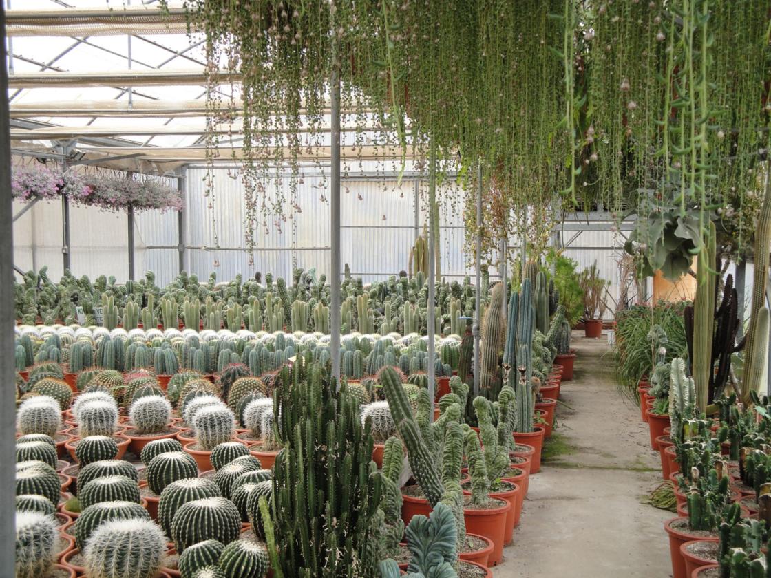 Cactus Costa Brava – Clase bcn